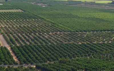 Campaña citrícola en la provincia de Alicante